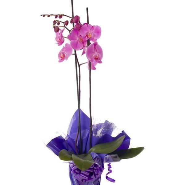 Regala orquídeas con La Botella de Nur